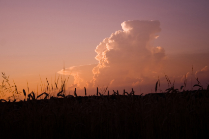 clouds at sunset above a field of barley